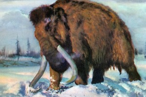 На дне Тобола обнаружена кость мамонта