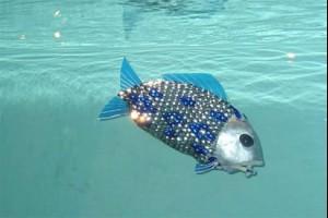 В Москве в павильоне №2 «Робостанция» на ВДНХ установили первый в России аквариум с рыбами-роботами