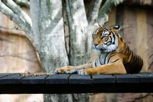 Московский зоопарк впервые будет участвовать во Всероссийском фестивале «NAUKA 0+»
